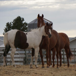 Rtr-ranch-retreat-3